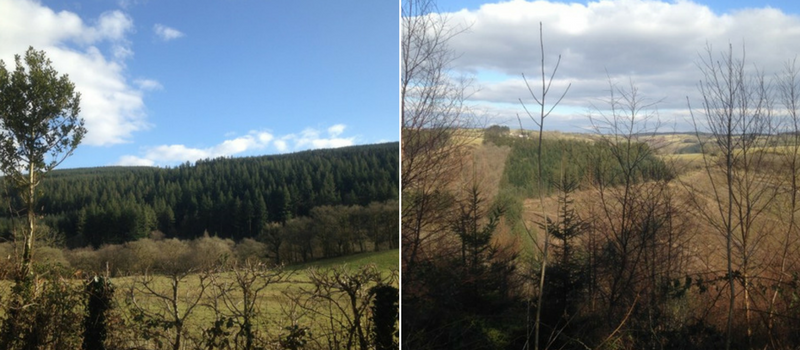 Brechfa Forest views